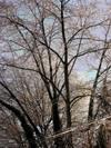 Icetree2